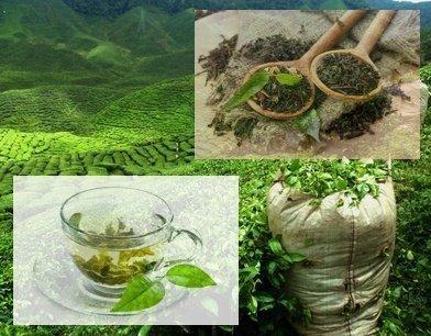 πράσινο τσαί